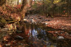 Autumn forest and creek Stock Photos