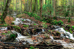 Autumn Forest Creek Royalty Free Stock Photo