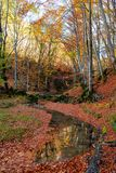 Autumn forest creek. Vibrant colors of autumn have paint this picturesque forest scenery stock image