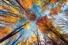 Autumn. Forest in the Crimea Royalty Free Stock Photos