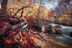 Autumn forest. In the Crimea Stock Photography