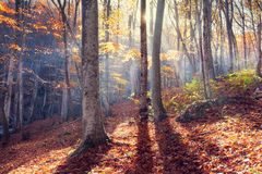 Autumn forest. In the Crimea Royalty Free Stock Image