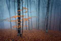 Autumn forest. In the Crimea (Ai-Petry Royalty Free Stock Images