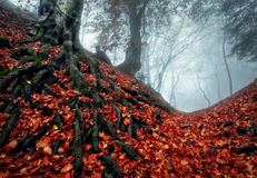 Autumn forest. In the Crimea (Ai-Petry Royalty Free Stock Image