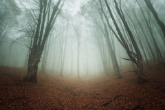 Autumn forest. In the Crimea (Ai-Petry Stock Photography
