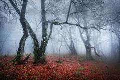 Autumn forest. In the Crimea (Ai-Petry Royalty Free Stock Photography