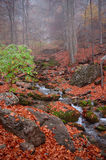 Autumn forest in Crimea mountain. Mountain brook in autumn forest in Crimea stock image