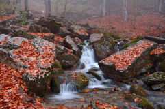 Autumn forest in Crimea mountain. Mountain brook in autumn forest in Crimea stock images