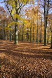 Autumn forest in Czech Republic Stock Image