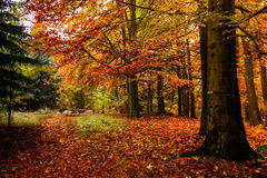 Autumn forest in Czech Republic. Autumn forest in South Bohemian region. Czech Republic royalty free stock photos