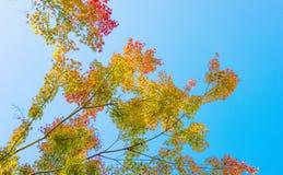 Autumn Forest dans Yoshino, Nara, Japon Photos stock