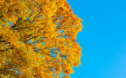 Autumn Forest dans Yoshino, Nara, Japon Photo stock