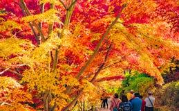 Autumn Forest dans Yoshino, Nara, Japon Photographie stock