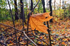 Autumn forest. Autumn day in forest Stock Photography