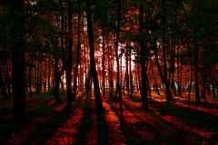 Autumn forest daylight landscape abstract Stock Photos