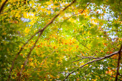 Autumn and forest. At daytime Stock Photography