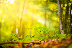 Autumn and forest. At daytime Stock Image