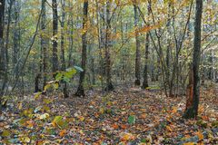 Autumn forest. Daytime in autumn forest Stock Photo