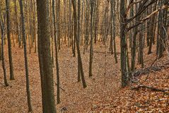 Autumn Forest Detail Royalty Free Stock Photo