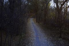 Autumn forest with dirt road. Horizontal moody photo Stock Photo