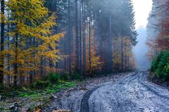 Autumn forest with dirt road high in the mountains. Foggy autumn forest with wet dirt road high in the mountains Stock Photos
