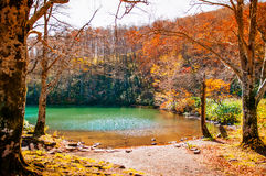 Autumn Forest at Dokko pond. Autumn scenery at Dokko pond in Yamagata, Japan royalty free stock photo