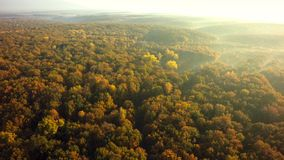 Autumn forest drone aerial shot, Overhead view of foliage trees.  royalty free stock image
