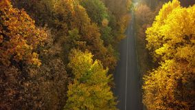 Autumn forest drone aerial shot, Overhead view of foliage trees. And road stock images