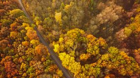 Autumn forest drone aerial shot, Overhead view of foliage trees royalty free stock photos