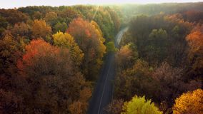 Autumn forest drone aerial shot, Overhead view of foliage trees royalty free stock photo