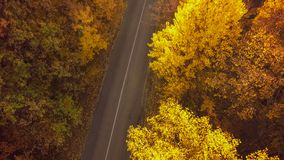 Autumn forest drone aerial shot, Overhead view of foliage trees stock photo