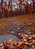 Autumn forest with dry leaves and the path Royalty Free Stock Photography