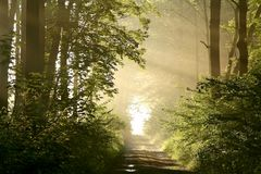 Autumn forest with early morning sun rays royalty free stock photography