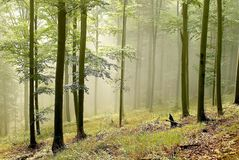 Autumn forest with early morning sun rays Stock Photography