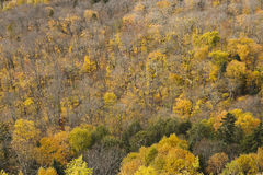 Autumn forest. Elevated view of a forest during the fall season. Some trees lost all their leaves and those that kept them have turned yellow (or green for the Stock Photography