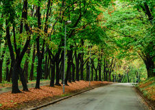 Autumn forest and empty road Royalty Free Stock Photo