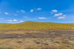 Autumn Forest In en Sunny Day i Ryssland royaltyfri fotografi