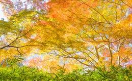 Autumn Forest en Yoshino, Nara, Japón Imágenes de archivo libres de regalías