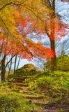 Autumn Forest en Yoshino, Nara, Japón Fotografía de archivo