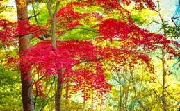 Autumn Forest en Yoshino, Nara, Japón Fotografía de archivo libre de regalías
