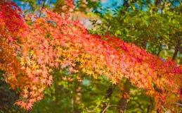 Autumn Forest en Yoshino, Nara, Japón Imagen de archivo libre de regalías