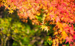 Autumn Forest en Yoshino, Nara, Japón Fotos de archivo