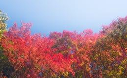 Autumn Forest en Yoshino, Nara, Japón Fotos de archivo libres de regalías