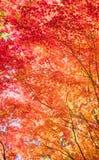 Autumn Forest en Yoshino, Nara, Japón Imagenes de archivo