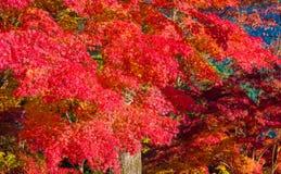 Autumn Forest en Yoshino, Nara, Japón Imagen de archivo