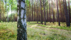 Autumn forest in Europe stock footage