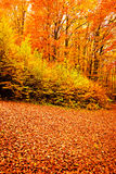 Autumn forest fall nature Royalty Free Stock Image