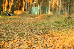 Autumn. Forest and fallen leaves stock images
