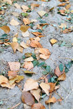 Autumn. Forest and fallen leaves royalty free stock image