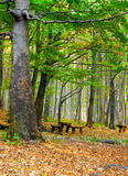 Autumn forest, fallen leaves and resting benches. Royalty Free Stock Photo